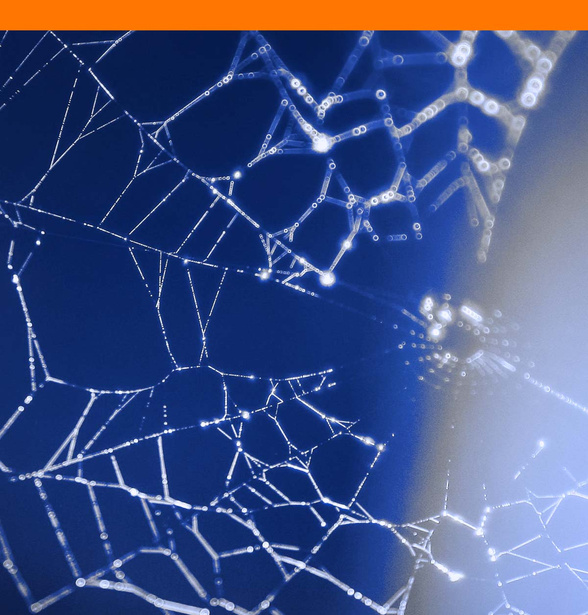 Best Internet and Data solutions for business - photo of spider web